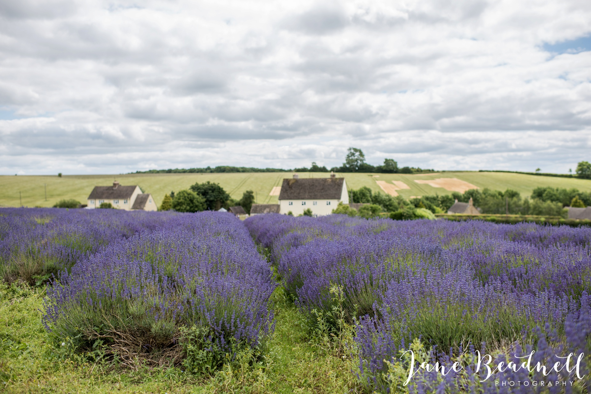 Cotswold Lavender wedding photography by Jane Beadnell Photography_0006